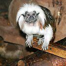 Monkey Magic by kittymomo