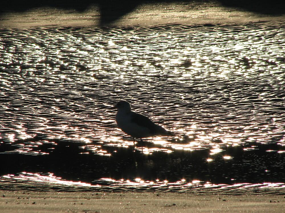 Seabird shadows by Beowulf