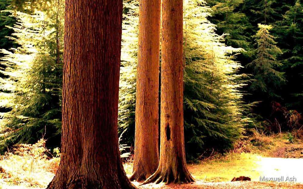 Three Trees by Maxwell Ash