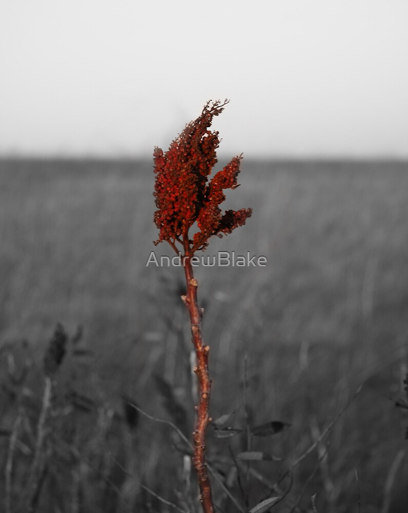 Sumac in the pasture by AndrewBlake