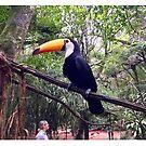 Brazil - Parque das Aves - Toucan by Ren Provo