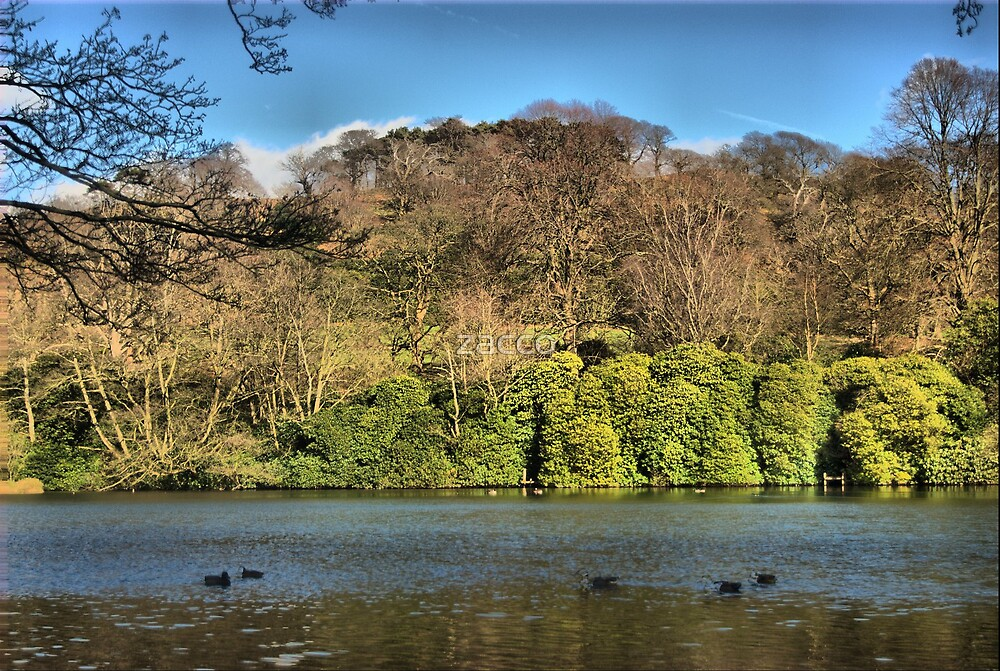 margam pond by zacco