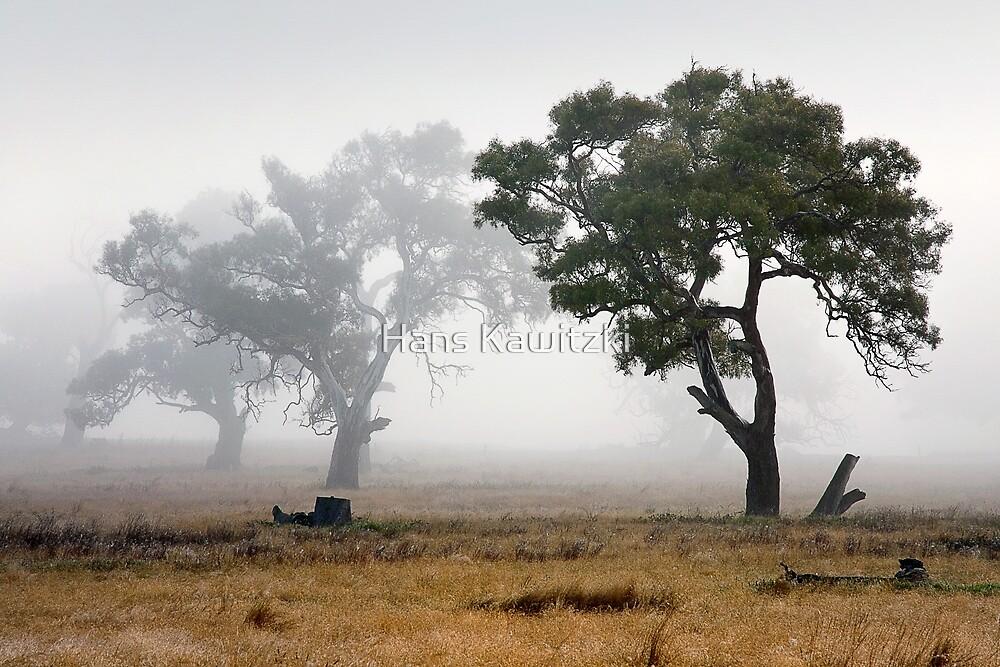 0716 Receding Fog by Hans Kawitzki