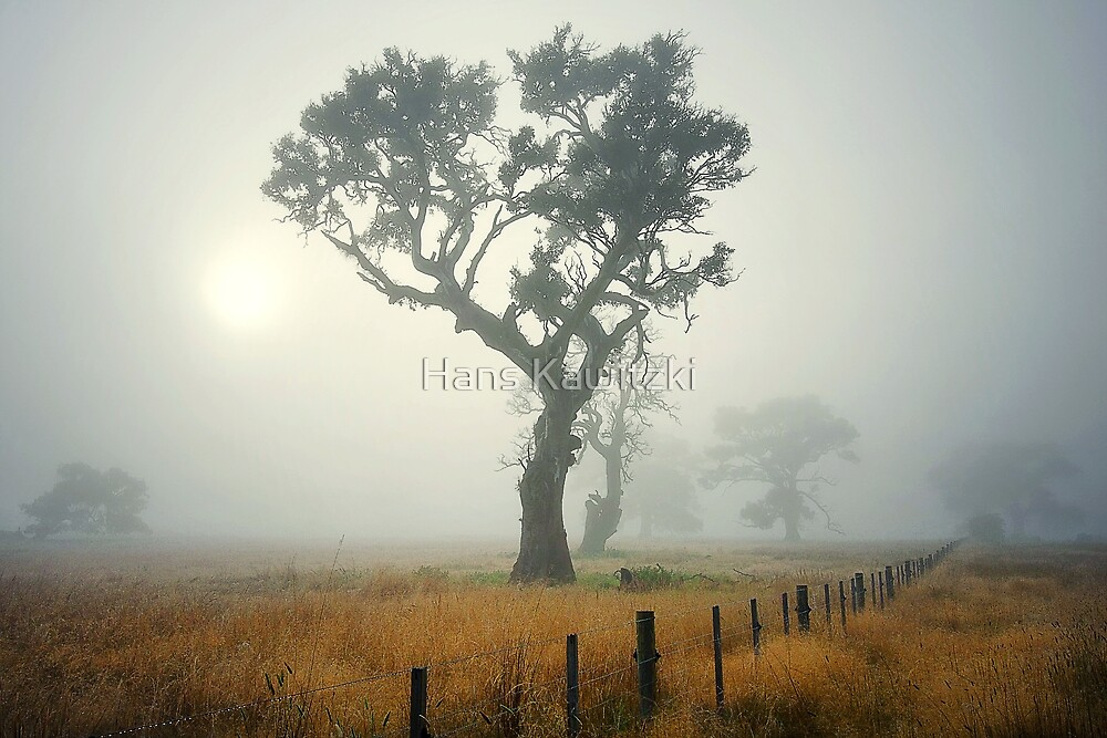 0719 The Tall One  by Hans Kawitzki