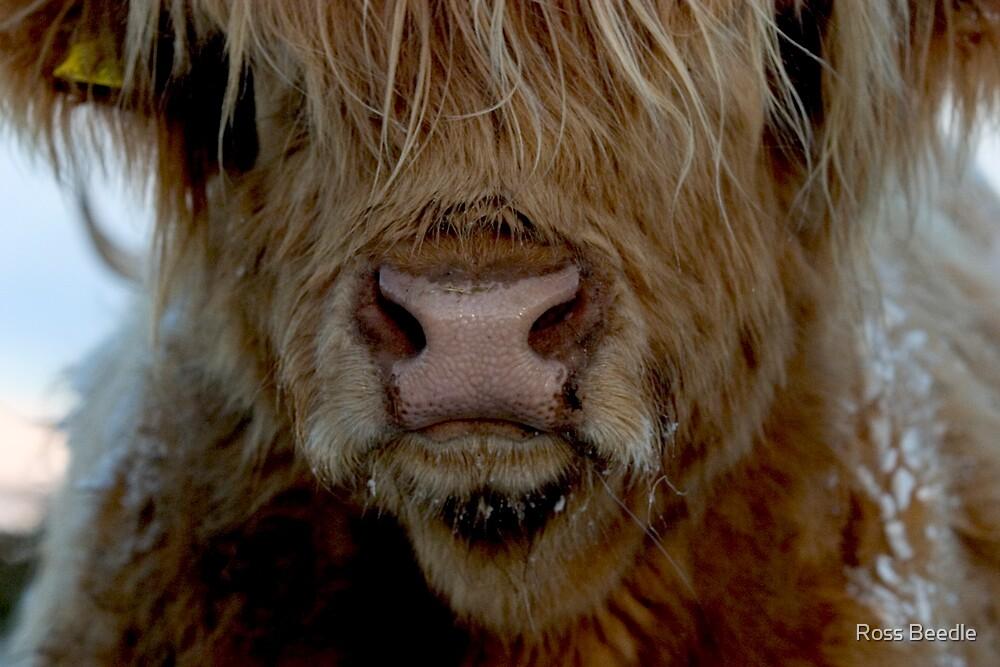 Alfie's Nose by Ross Beedle