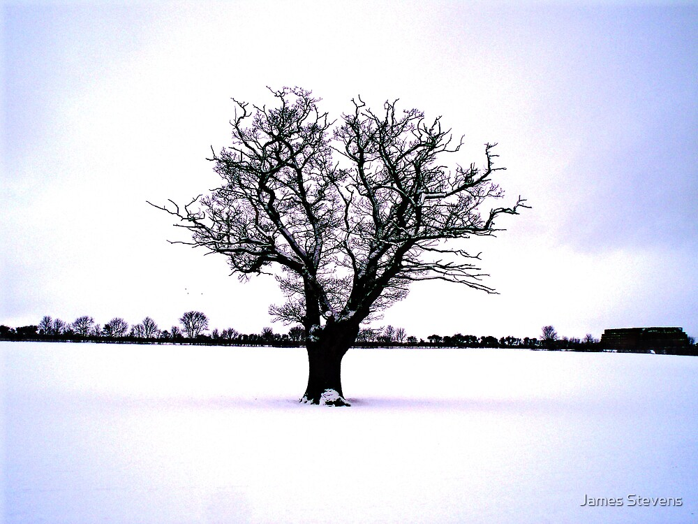 Lone Tree in Snow Naturally by James Stevens
