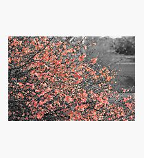Spring shrub in bloom Photographic Print