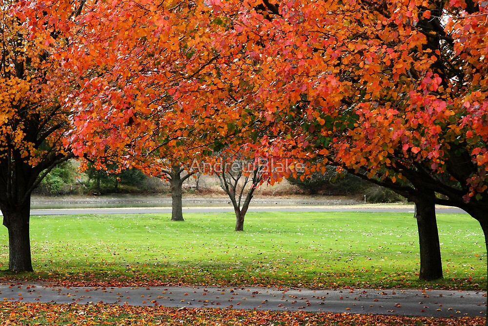 Bradford pears in autumn by AndrewBlake