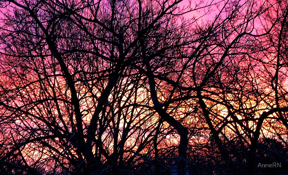 Sunrise Through  Winter Branches by AnneRN