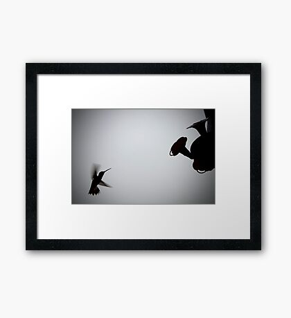 In The Shadow of a Hummingbird Framed Print