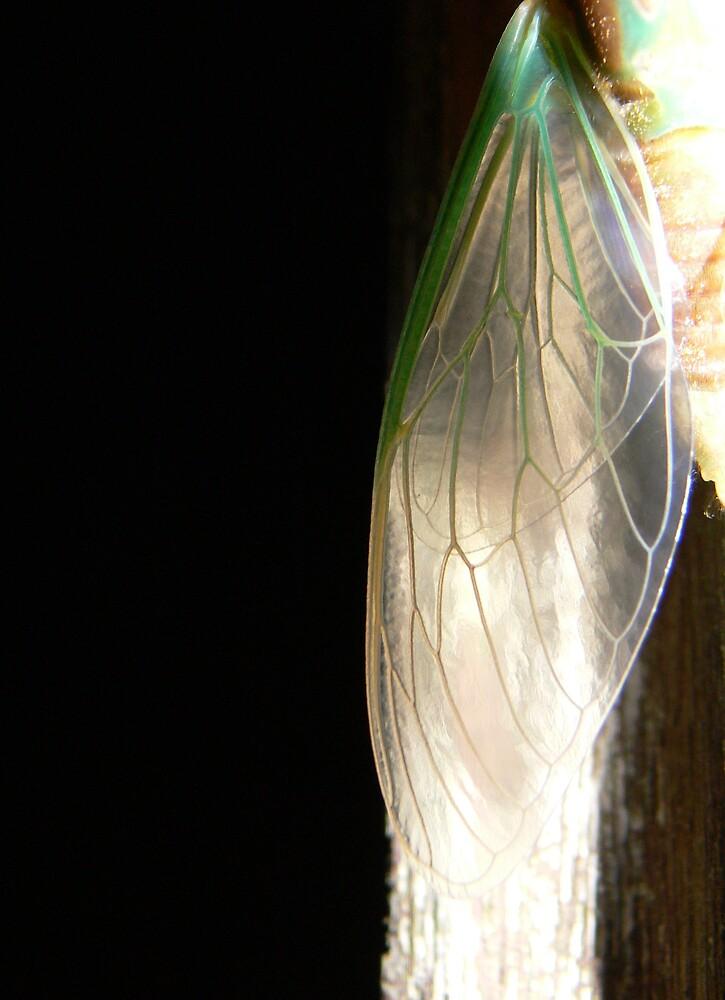 newborn cicada by Tara Chiu