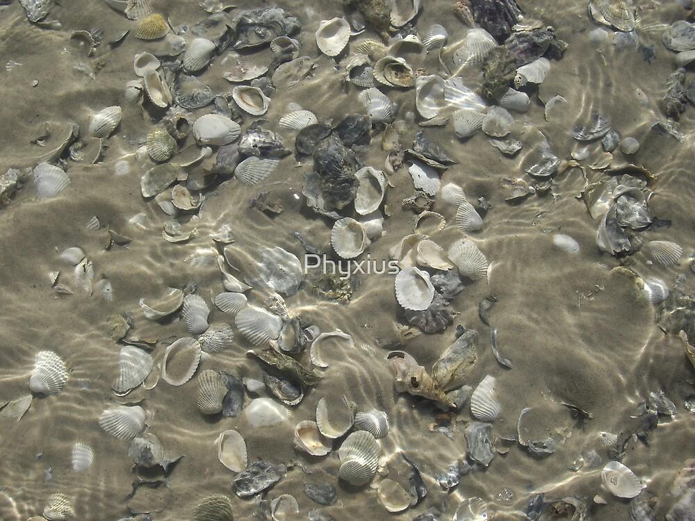 Shiny Shells by Phyxius