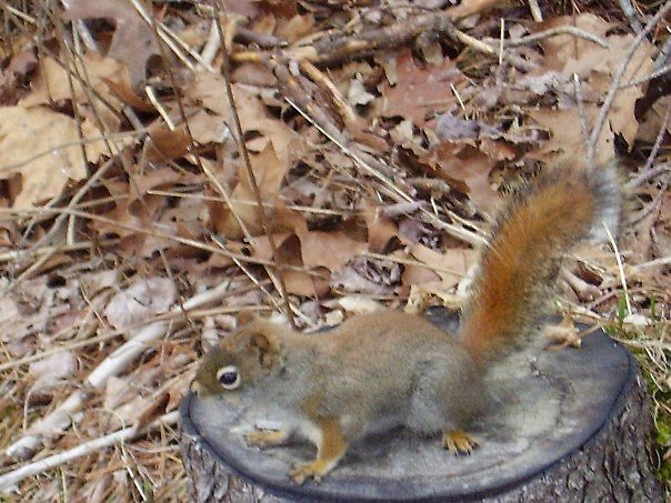 nut? by Jennifer Marie