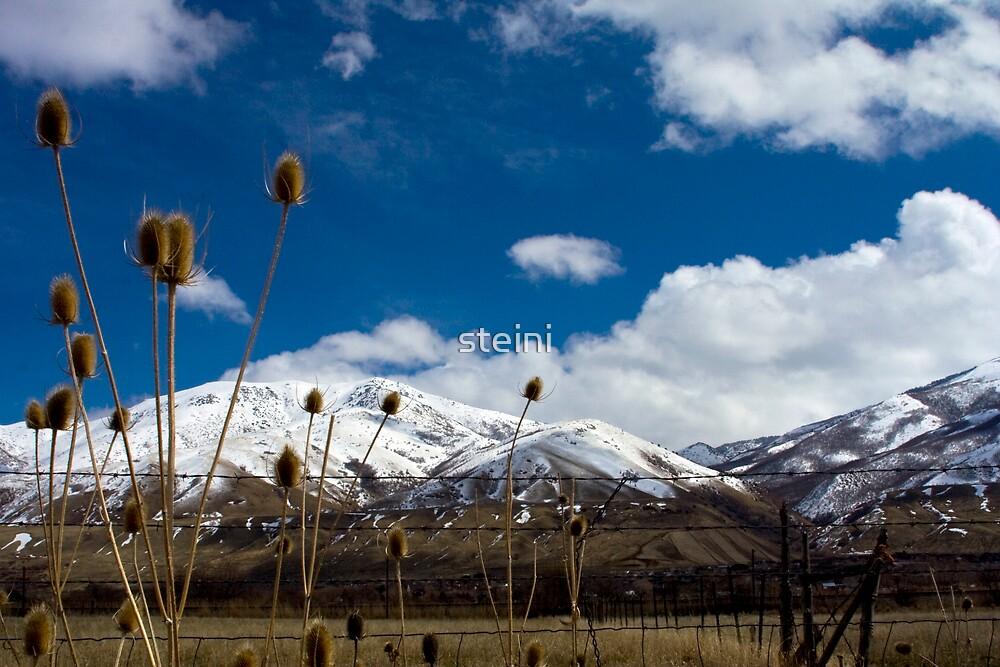 Seasonal Bliss by steini