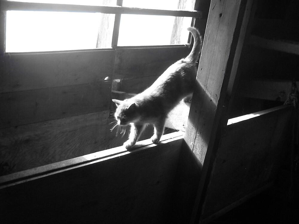 barn cat by lisamariee