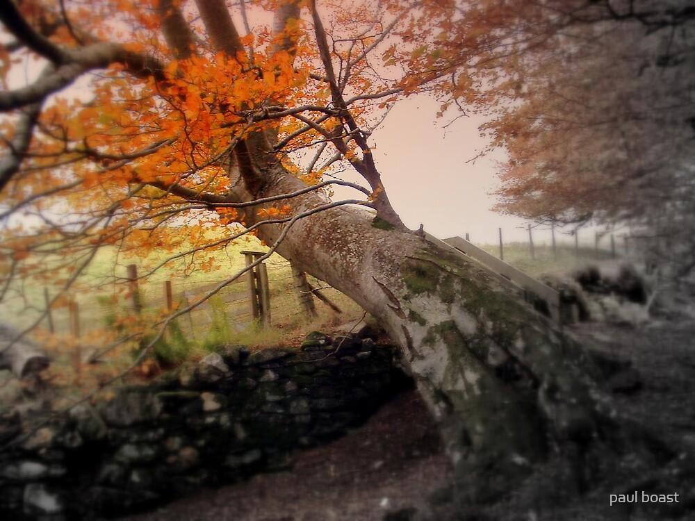 Big Tree, Perthshire by paul boast