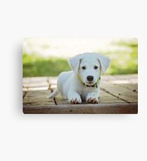 Cute Puppy For Your Child Canvas Print