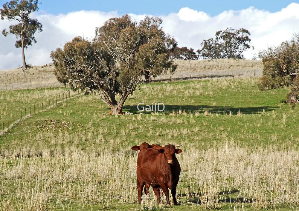 No Bull Here by GailD