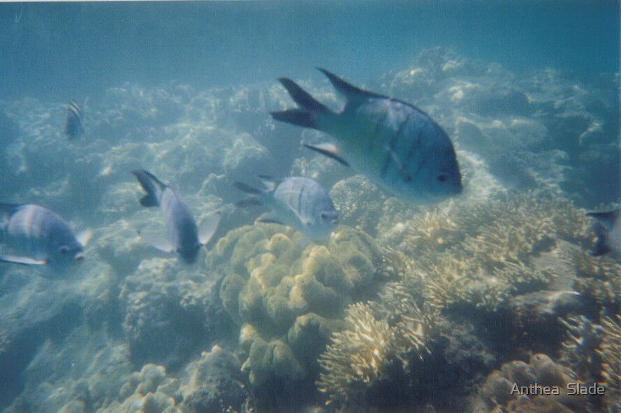Fish at Day Dream Island by Anthea  Slade