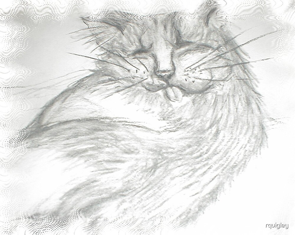 FAT CAT by rquigley