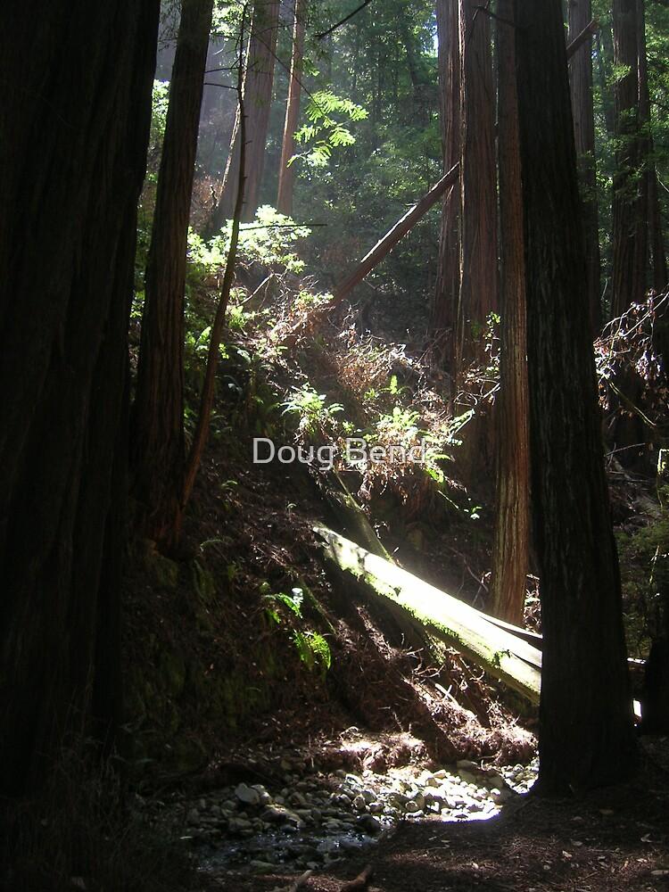 Daylight by Doug Bend
