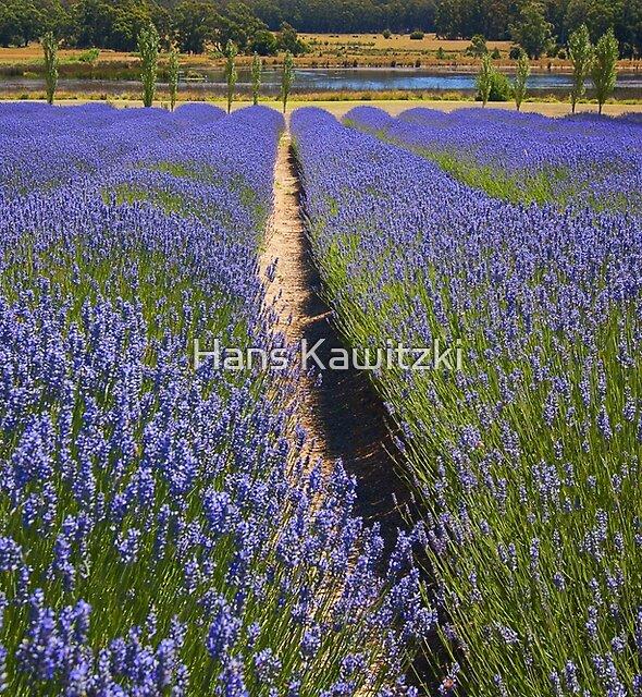 0758 Lavender field - Daylesford by Hans Kawitzki