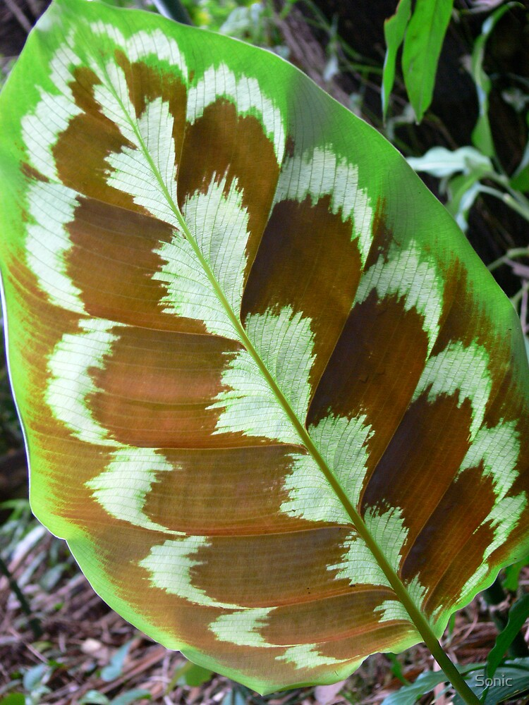 Leaf Patterns by Sonic