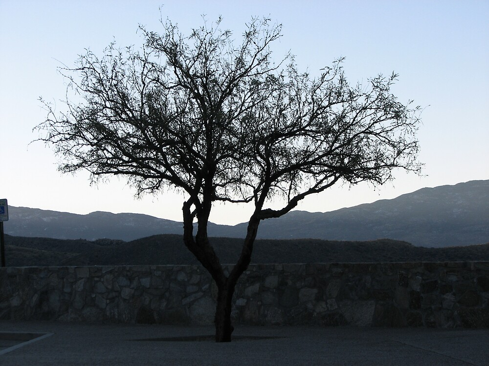 Tree before Sunrise by Beowulf
