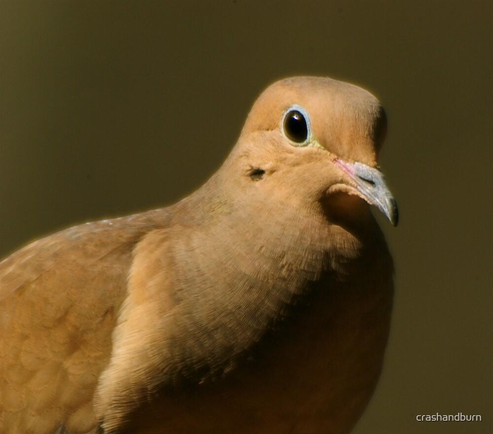 Dove (card series) by crashandburn