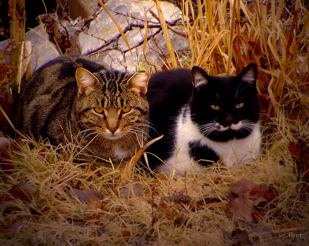 Feral Cats by Bret