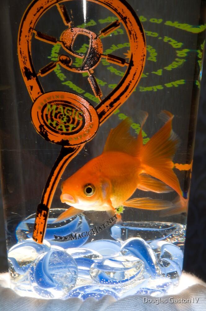 Fan Tail GoldFish 2 by Douglas Gaston IV