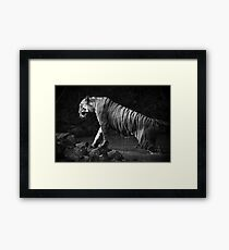 Bengal tiger leaves water hole in mono Framed Print
