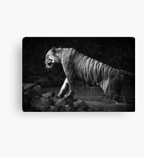 Bengal tiger leaves water hole in mono Canvas Print