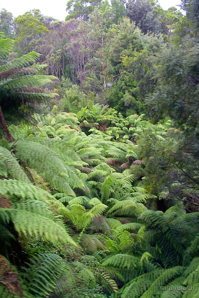 Fern Gully by sarah ward