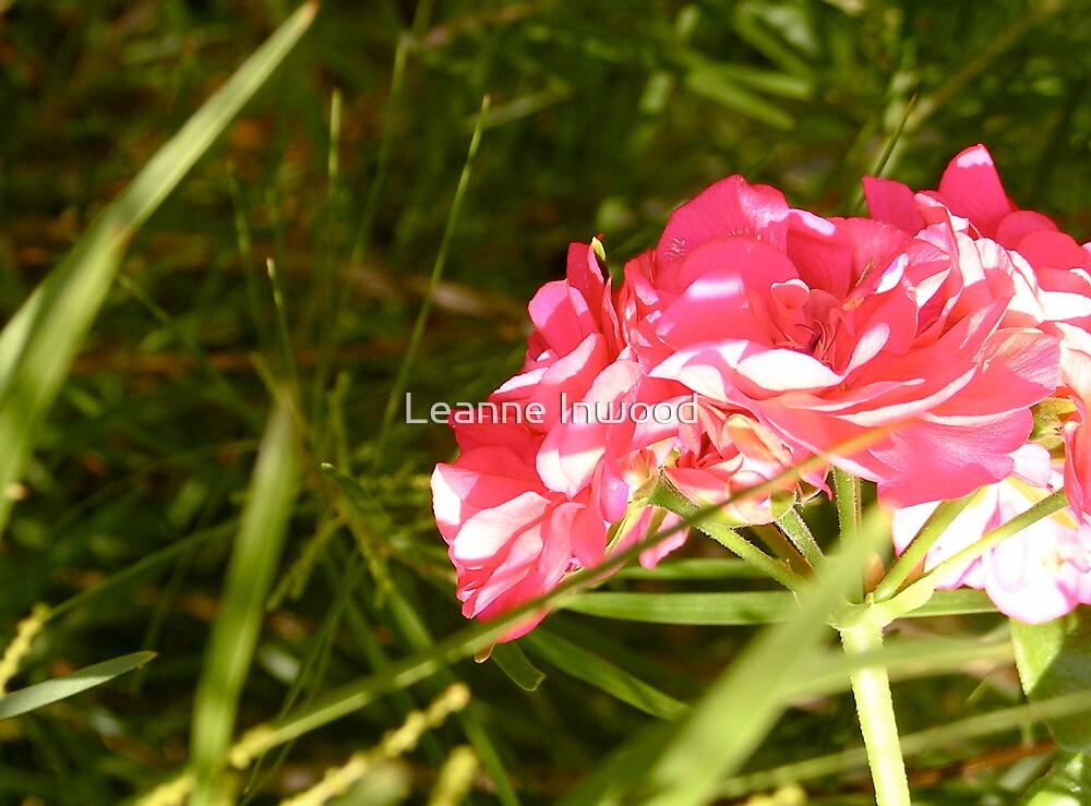 geranium by Leanne Inwood