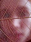 Leaf Skeleton by Chelsea Kerwath