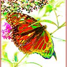 Gossamer Wings Red ©  by Mary Campbell