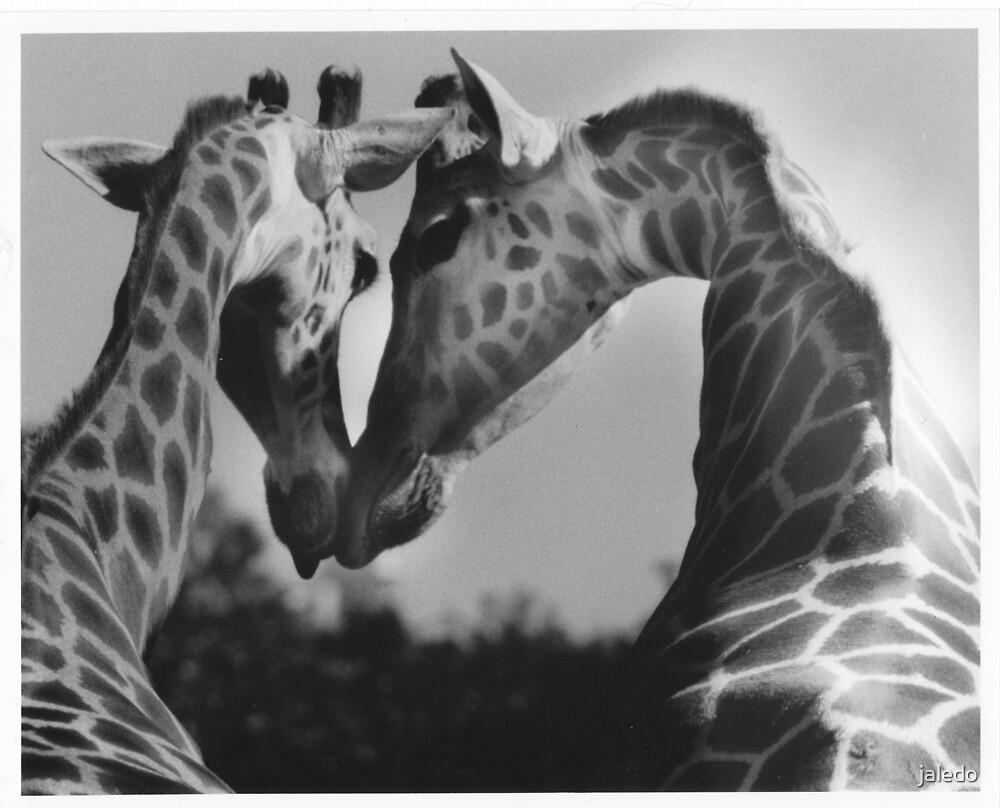 Giraffes in Love by jaledo