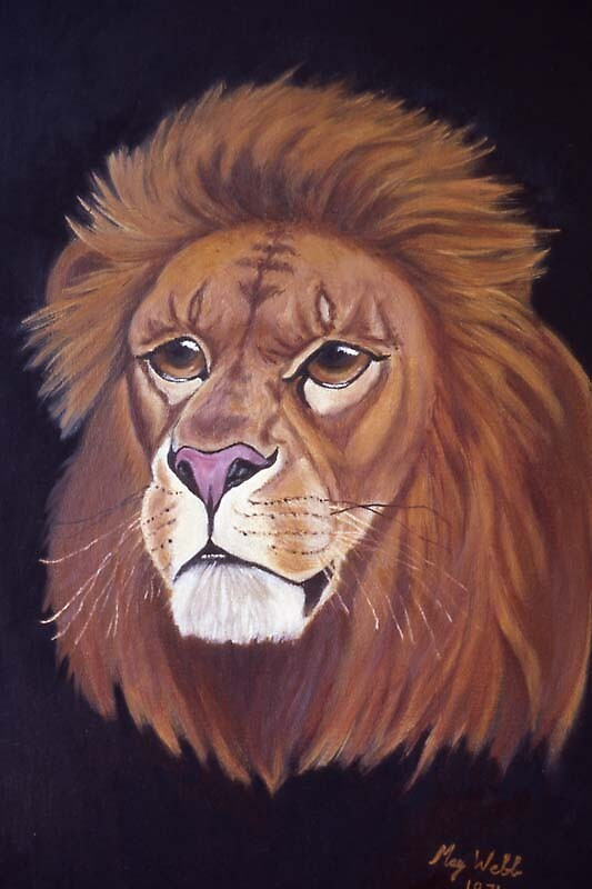 Lion by MayWebb