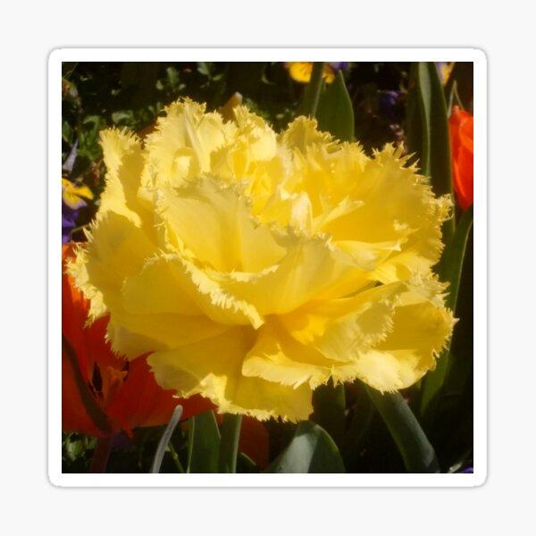 Happy Little Yellow Tulip  Sticker