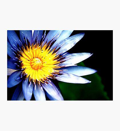 Asian Lotus Photographic Print
