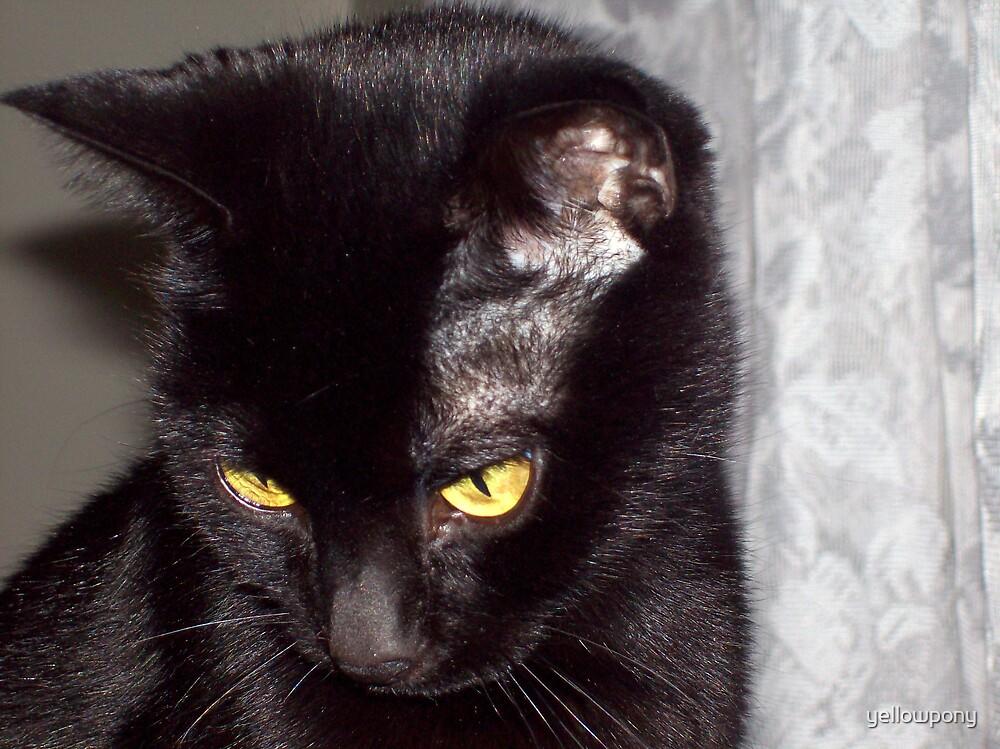 syco kitty by yellowpony