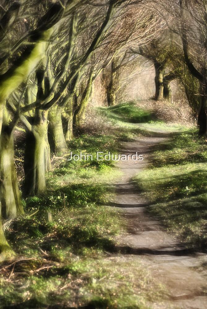 Woodland path by John Edwards