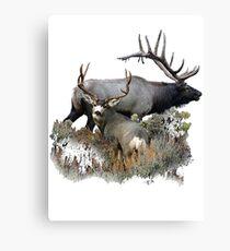 Bull elk and mule deer buck Canvas Print