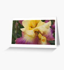 Colorado Iris Number One Greeting Card