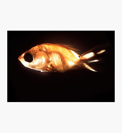 Glowfish Photographic Print