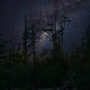 Milky way forest by Lalale