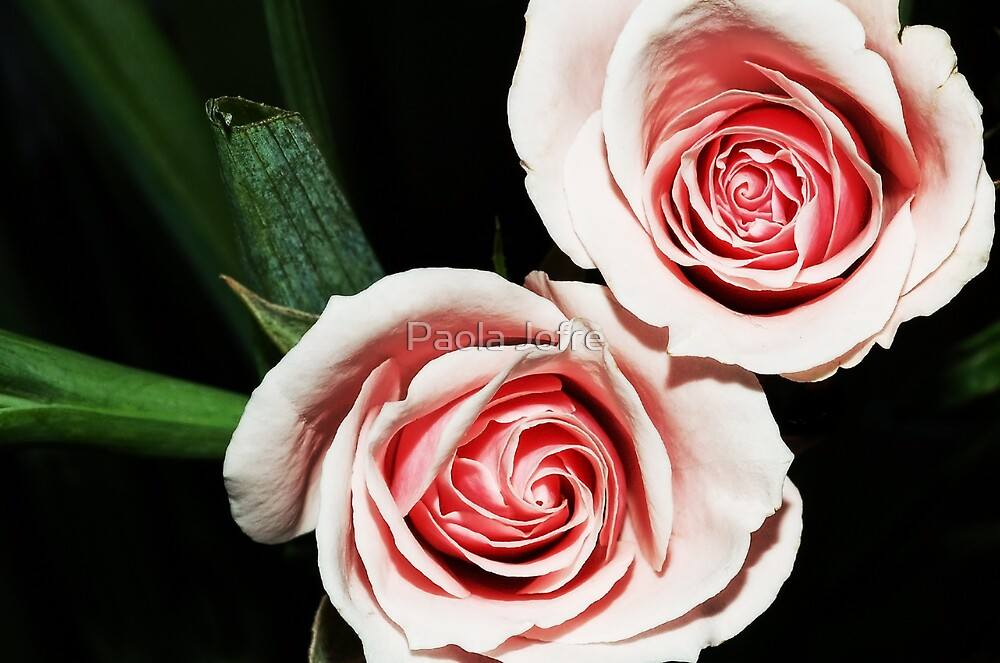 Baby roses by Paola Jofre