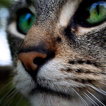 Green Eyes III by Helena1