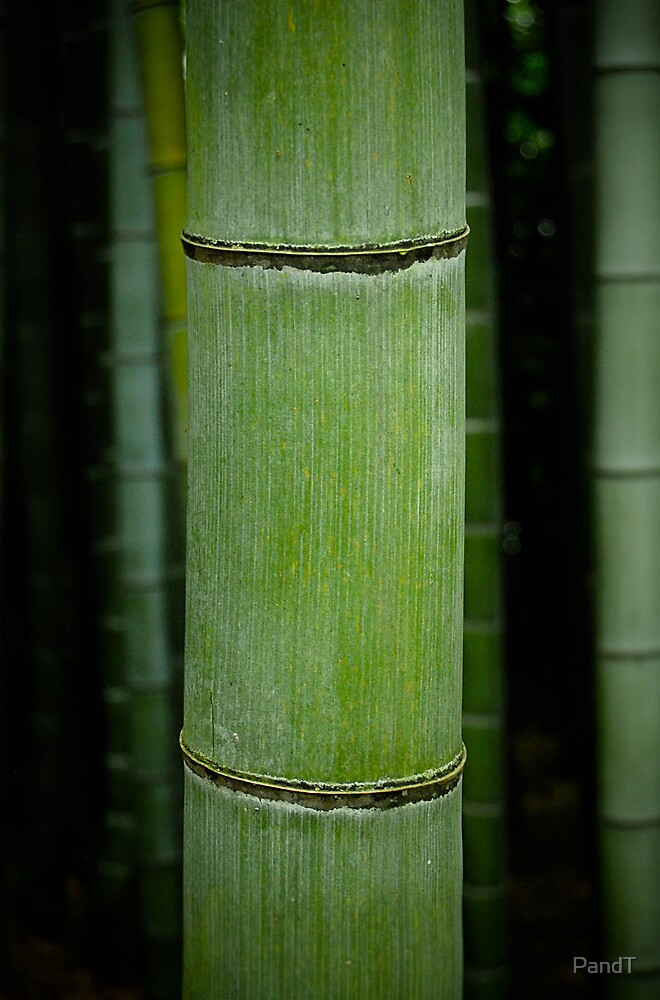 Bamboo by P&T Photography